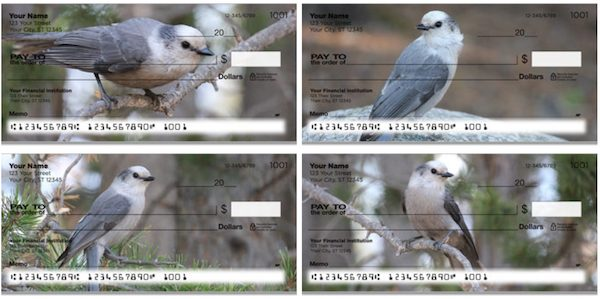 Gray Jay Bird Checks